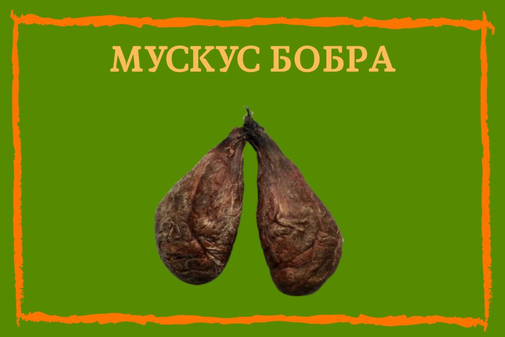 Мускусная железа бобра